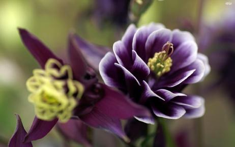 Beautiful-flower-13