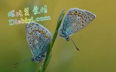 butterfly1_diebiyi