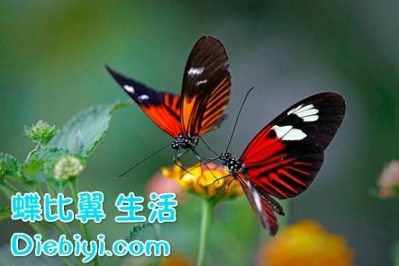 butterfly4_diebyi